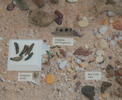 Display as part of the Palenontology Exhibit